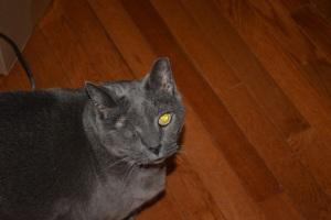 My one-eyed  cat!