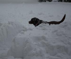 snowdogsno3enhanced